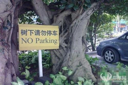 树下停车危害